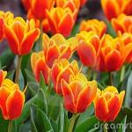 La Primavera di Imola è appena iniziata!  By Mario Zaccherini e Video